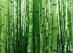 bamboo - motivasi diri